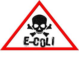 E-Coli germen patógeno