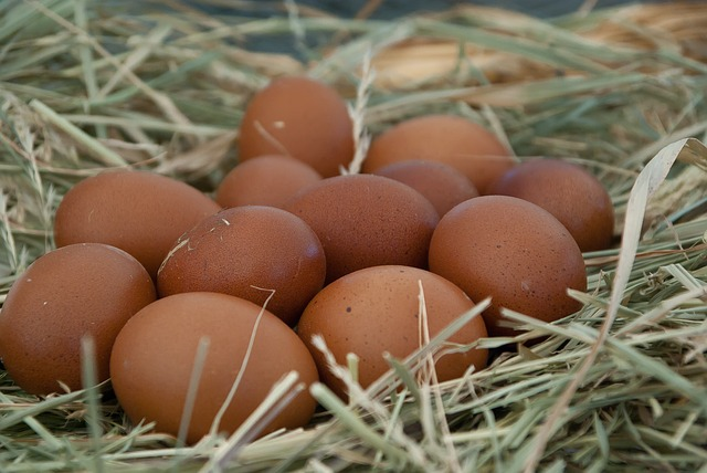 Huevos con Omega-3