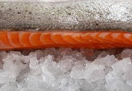 Salmon conservado a 1ºC